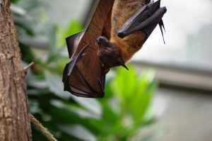 Hunters Creek Bat Removal